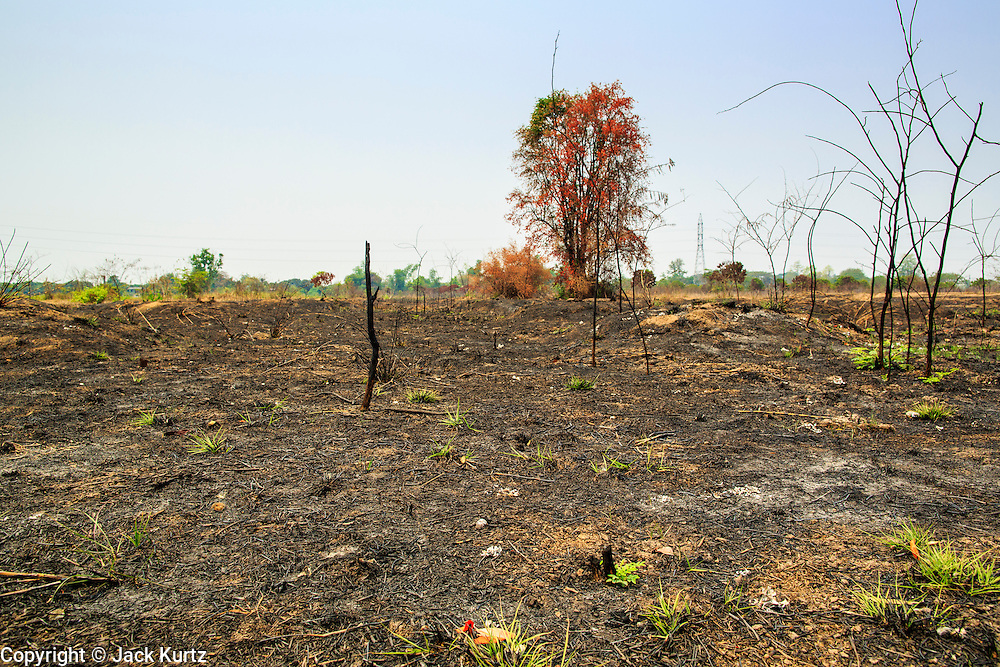"""09 APRIL 2013 - BANTHI, LAMPHUN, THAILAND:    A burnt out field in Banthi, Lamphun province, Thailand. The """"burning season,"""" which roughly goes from late February to late April, is when farmers in northern Thailand burn the dead grass and last year's stubble out of their fields. The burning creates clouds of smoke that causes breathing problems, reduces visibility and contributes to global warming. The Thai government has banned the burning and is making an effort to control it, but the farmers think it replenishes their soil (they use the ash as fertilizer) and it's cheaper than ploughing the weeds under.    PHOTO BY JACK KURTZ"""