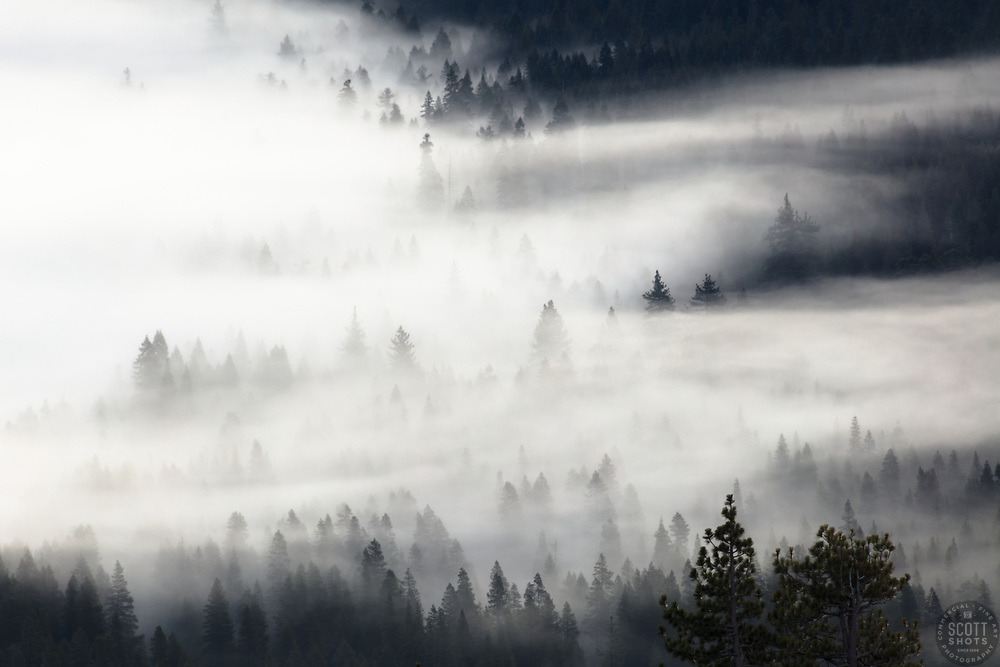 """""""Fog in the Trees 1"""" - Photograph of fog in the trees near Donner Lake, California."""