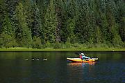 USA, Oregon, Trillium Lake, paddler with family of Mallards (Anas plathyrhynchos).