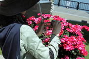 woman making photo of roses in full bloom