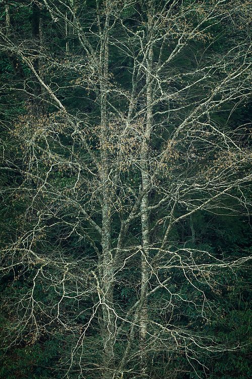 Bare trees, Great Smoky Mountains National Park