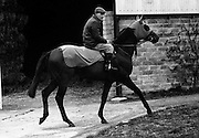 "Vincent O'Brien with 'Sir Ivor' at O'Brien Stables, Cashel. ""Sir Ivor' was owned by American businessman and U.S. Ambassador to Ireland, Raymond R. Guest. The horse was named for his British grandfather, Sir Ivor Guest, 1st Baron Wimborne. 'Sir Ivor' won three races in 1967, the Grand Criterium at Longchamp and the National Stables and the Probationers State at the Curragh. .11.03.1968"