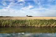 Nederland, Noordpolderzijl, 14-10-2018In het noordelijk kustgebied van Groningen. Een verlaten, leegstaande boerderij in het weidse landschap. Noordpolderzijl is onderdeel van de gemeente Eemsmond .Foto: Flip Franssen