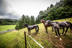 Horses during 5th Stage of 26th Tour of Slovenia 2019 cycling race between Trebnje and Novo mesto (167,5 km), on June 23, 2019 in Slovenia. Photo by Vid Ponikvar / Sportida