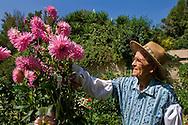 Elderly man working outdoors as volunteer gardner at South Coast Botanical Garden, Palos Verdes Peninsula, California