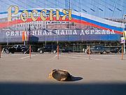 Strassenszene mit einem obdachlosen Hund im Zentrum der russischen Hauptstadt Moskau. <br /> <br /> Streetscene with a homeless dog in the center of the Russian capitol Moscow.