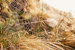 THEMENBILD - ein großes Spinnennetz im herbstlichen Morgenlicht, aufgenommen am 15. September 2019, Saalbach Hinterglemm, Österreich // a large spider's web in the autumn morning light on 2019/09/15, Saalbach Hinterglemm, Austria. EXPA Pictures © 2019, PhotoCredit: EXPA/ Stefanie Oberhauser