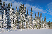 Boreal forest in winter<br />Duck Mountain Provincial Park<br />Manitoba<br />Canada
