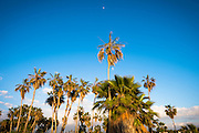 The moon rises over palm trees in San Pedrito in southern Baja, Mexico.