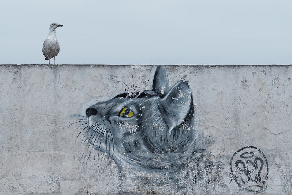Seagull above a wall painting of a cat head.