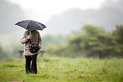 © Licensed to London News Pictures. 28/05/2014. Richmond, UK. A woman walks with an umbrella.  Wet weather in Richmond Park today 28th May 2014. Photo credit : Stephen Simpson/LNP