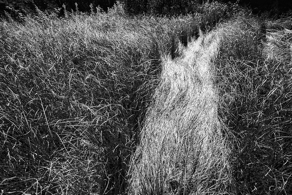 Tire tracks design in tall grass, October, Lower Peninsula, Michigan, USA