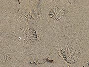 imprint of slippers in the wet sand on a beach