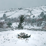 Mule rolling in snow. Life at Mr and Ms Wangchuk's house on the edge of the Laya village.