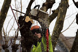UK ENGLAND LONDON 11DEC13 - A tree surgeon prunes a sycamore tree in Shirland Road, Westminster, west London.<br /> <br /> jre/Photo by Jiri Rezac<br /> <br /> © Jiri Rezac 2013
