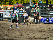"26 JUNE 2019 - CENTRAL CITY, IOWA: A rider on a sheep during the ""Mutton Bustin' "" contest at the Linn County Fair. Mutton Bustin' is an event for young children. They ride sheep bareback for six seconds. Summer is county fair season in Iowa. Most of Iowa's 99 counties host their county fairs before the Iowa State Fair, August 8-18 this year. The Linn County Fair runs June 26 - 30. The first county fair in Linn County was in 1855. The fair provides opportunities for 4-H members, FFA members and the youth of Linn County to showcase their accomplishments and talents and provide activities, entertainment and learning opportunities to the diverse citizens of Linn County and guests.     PHOTO BY JACK KURTZ"