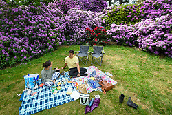 © Licensed to London News Pictures. 24/05/2020. IVER, UK.  A couple enjoy a picnic amongst the variety of rhododendrons flowering during warm weather in the Temple Gardens of Langley Park, now open to the public again as the UK government has slightly relaxed coronavirus pandemic lockdown restrictrions.  A former royal hunting ground, Langley Park has links to King Henry VIII, Queen Elizabeth I and Queen Victoria.  Each year, the masses of flowers bloom from March to June.  Photo credit: Stephen Chung/LNP