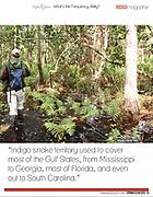 Orianne Society Indigo Magazine article Page 3