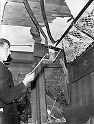 01/07/1960<br /> 07/01/1960<br /> 01 July 1960<br /> Westport - Dublin train derailed at Killucan, Co. Westmeath, clean up operation. Interior of one of the damaged carriages.