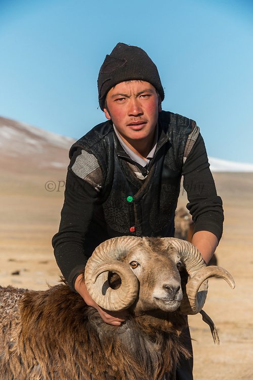 Ram<br /> Altai Mountains<br /> Bayan Olgii Province<br /> Western Mongolia