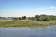 Nederland, Ooijpolder, 21-5-2020 Zicht op de Waal . Aan de overkant van de strang graast een kudde wilde paarden, konikpaarden, koniks . Binnenvaartschip vaart voorbij . Natuurbeheer in de  uiterwaarden, gelderse poort, millingerwaard . Foto: Flip Franssen
