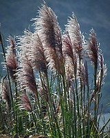 Sea Grass along the northern California Pacific Coast. Image taken with a Nikon D200 camera and 80-400 mm VR lens.