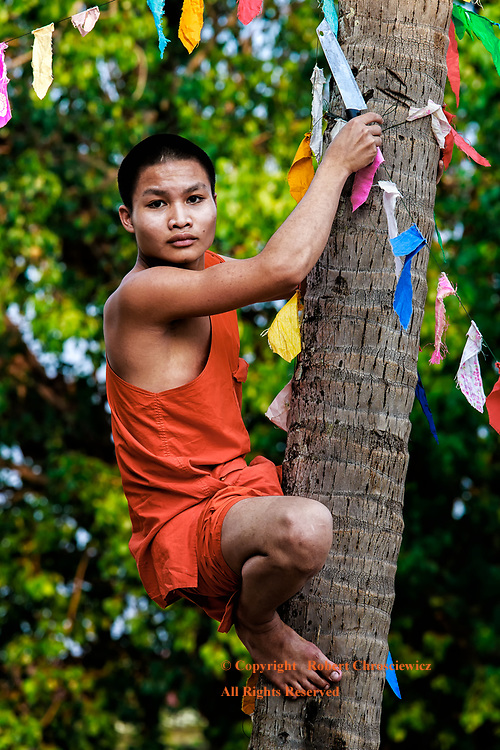 Up A Tree: After a Buddhist celebration in Wat Nabo, a young monk climbs up a palm tree to cut down decorations, a machete in hand, , Tha Khek Laos.