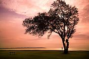A sunset walk under a tree on the coast of South Carolina.