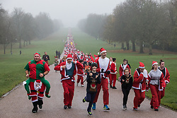 Windsor, UK. 24 November, 2019. Fun runners dressed as Santa Claus and his reindeer take part in the 2019 Windsor Santa Dash on the Long Walk in Windsor Great Park in aid of the Alexander Devine children's hospice.