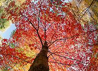 Fall color  ©2015 Karen Bobotas Photographer
