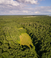 Aerial view of beautiful forest on the coast of island Vormsi, Estonia