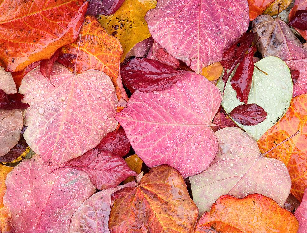 Raindrops on Colorful Autumn Leaves Design
