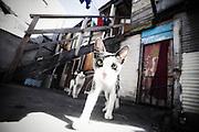 Gatti nel cortile interno di un convettillo nel quartiere de La Boca a Buenos Aires, 4 marzo 2011.<br /> Foto Christian Mantuano / OneShot
