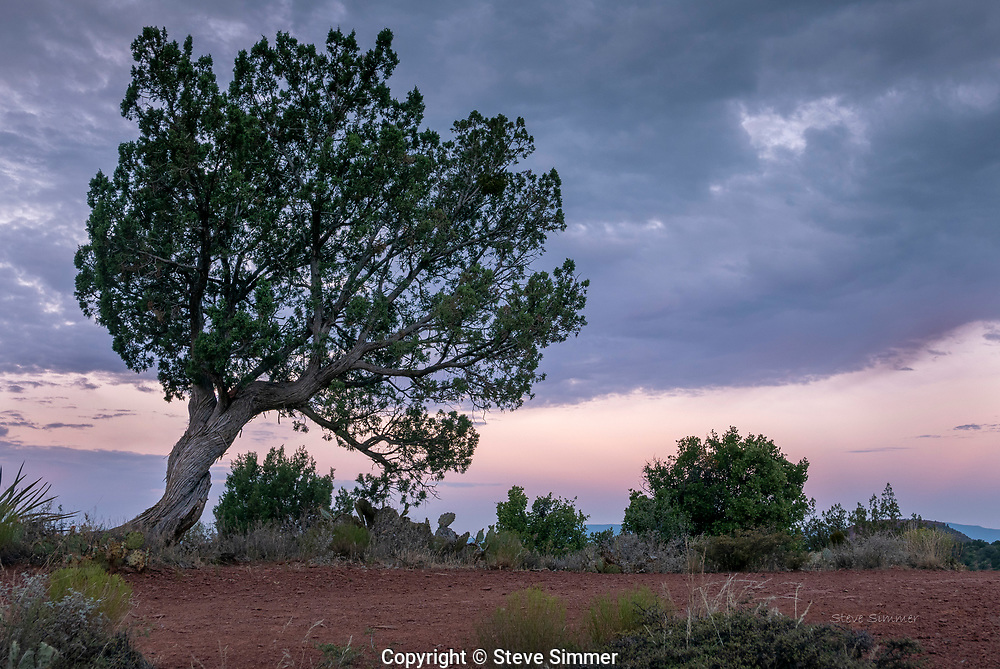 At  Dry Creek Vista, a tree and I watched the sun rise.