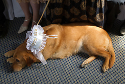 Guide dog at owner's wedding.