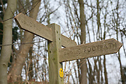 Wooden footpath signs pointing three directions