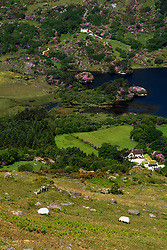 July 21, 2019 - View From Healy Pass With Glanmore Lake, Co Kerry, Ireland (Credit Image: © Peter Zoeller/Design Pics via ZUMA Wire)