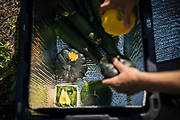 FARMER NAME packs up a vegetable delivery from the garden at Waite House Neighborhood Center in Minneapolis, Minnesota, U.S., on Friday, July 24, 2020. Photographer: Ben Brewer/Bloomberg