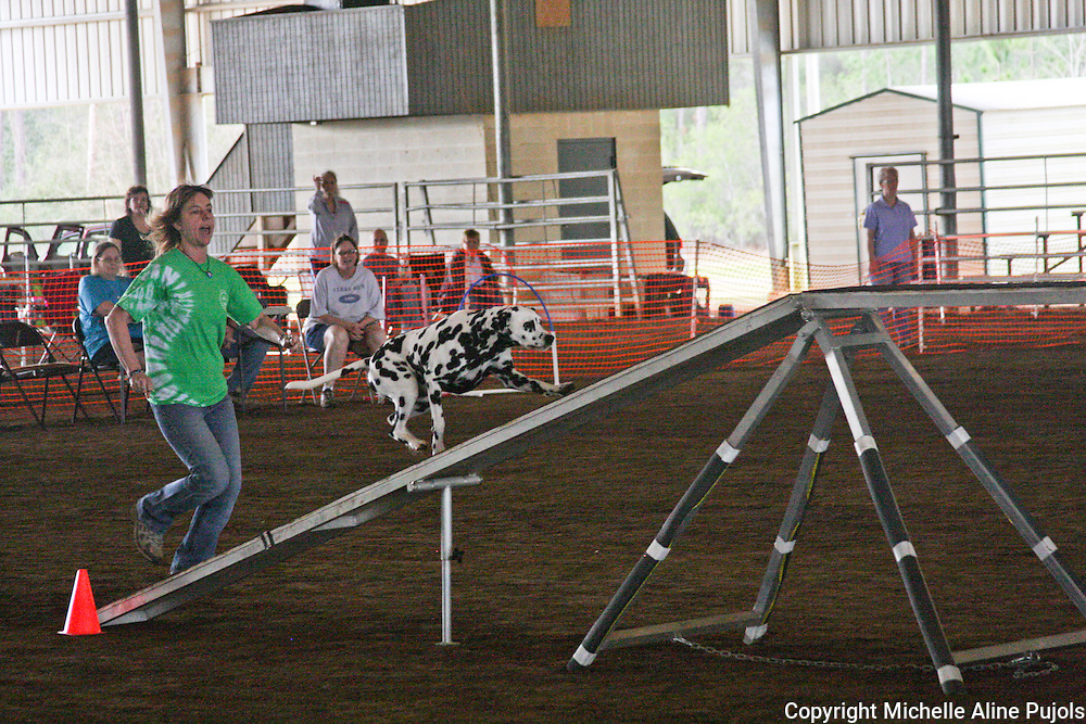 Dogs competing in agility trials on the beam.