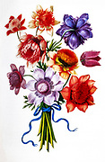 Bouquet of Poppy Anemone (Anemone coronaria) 17th century hand painted on Parchment botany study of a from the Jardin du Roi botanical Florilegium of Prince Eugene of Savoy collection, Paris c. 1670 artist: Nicolas Robert