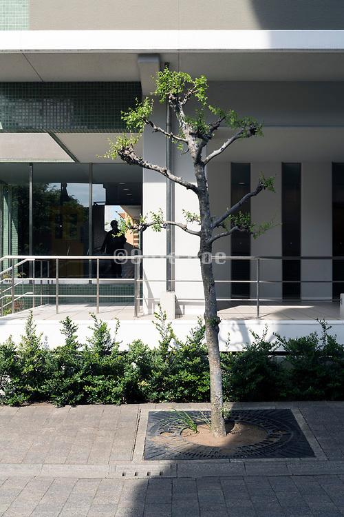 trimmed tree near the entrance of a flat building Yokosuka Japan