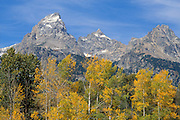 Fall aspens under the Grand Teton and Mount Owen, Grand Teton National Park, Wyoming