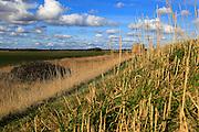 Marshland landscape on flat between Bawdsey and Alderton, Suffolk, England, UK from coastal defence dyke wall