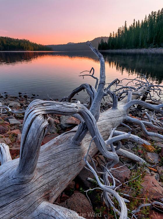 Snag and Juniper Lake at Dawn,Lassen Volcanic National Park, California