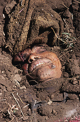 "Daha, 08 March 2005... A 45 years old Maoist roughly buried near Daha village. ""Yesterday - March 7, 2005 - at around 10am a patrol from the RNA (Royal Nepal Army) was in this area. Nobody recognised them at first because they got in disguised as women, but then they revealed their hidden weapons and shot dead that Maoist. Soon after other RNA in uniform arrived here and destroyed a Maoist's house. They have also captured an old man, he was beaten and then released. The RNA told us that they killed the Maoist because he did have a socket bomb with him, but we didn't see it and there was not any explosion. We are afraid from both the Royal Nepal Army and the Maoist"" local witness says."