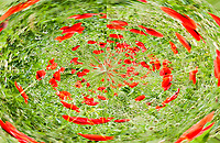 round shape with flowers swirl on brilliant green background