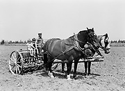 9969-4345. Drilling grain on a small farm near Redmond, Oregon. Howard Hein with his sons, Harry (two and a half), and Ivan (four). August 22, 1939.