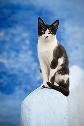 Cat and blue wall, Chefchaouen, Morocco