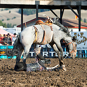 Judd Applegate on Red Eye Rodeo Little Ice at the Darby Broncs N Bulls event Sept 7th 2019.  Photo by Josh Homer/Burning Ember Photography.  Photo credit must be given on all uses.