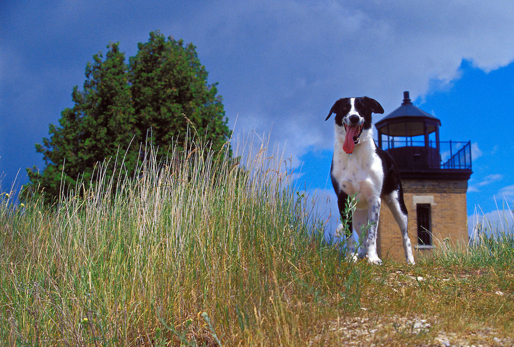 A DOG TAKES IN THE VIEW NEAR POINT PENINSULA LIGHTHOUSE ON THE STONINGTON PENINSULA NEAR RAPID RIVER MICHIGAN.